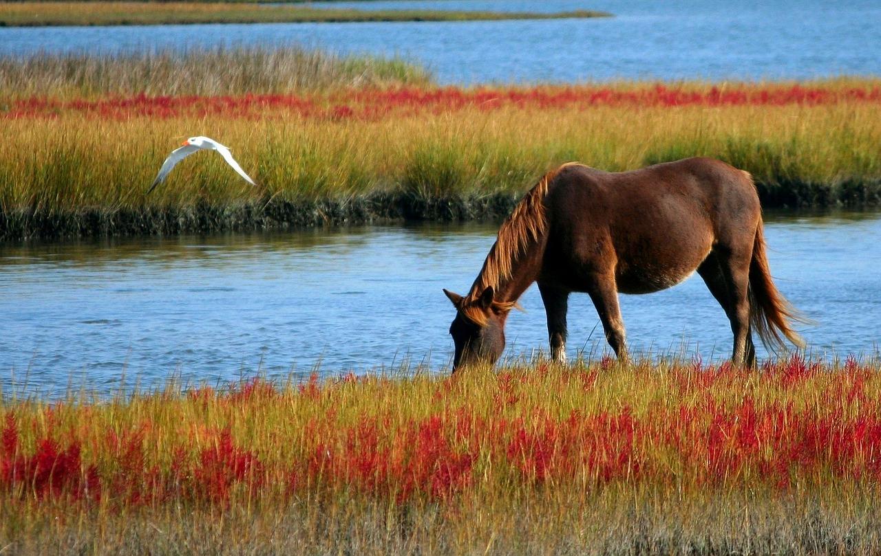 注目新馬】フォイヤーヴェルクがゲート試験通過し予定通り放牧へ ...