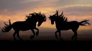 """【ホープフルS予想2017】記念すべき第1回目、注目の有力馬""""2頭""""とは?"""