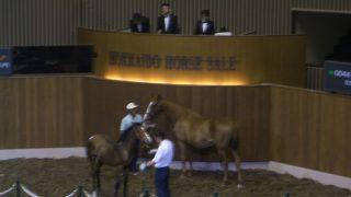 【きさらぎ賞2016予想】2億3000万円の馬に大きな期待