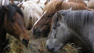 種付け料世界一の種牡馬はどの馬でおいくら?