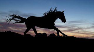 """【フィリーズレビュー2016予想】""""奇跡の牝馬""""キャンディバローズ!"""