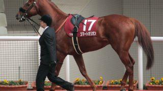 【京成杯AH予想】善戦続きの4歳牝馬スマートリアン、初の重賞制覇となるか?