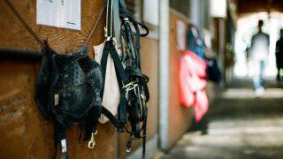 リアルスティールとディーマジェスティ休養。有馬記念には出走せず