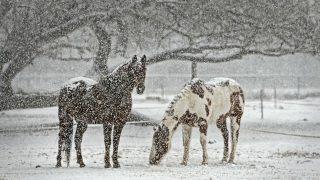JRA、降雪予報のため9日(土)東京競馬の金曜日夜間発売を取りやめ