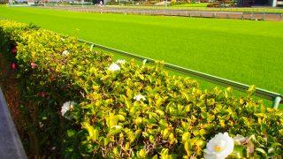 真夏の競馬と真冬の競馬