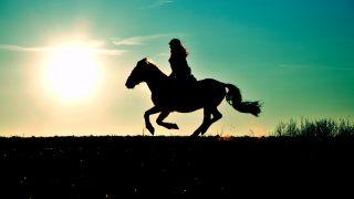 実は今、日本で旬なドイツで生まれた80年前の牝馬の血