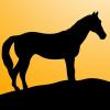 【注目新馬】パイオニアプライド、強気の参戦は勝算あり?