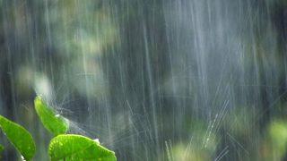 """【宝塚記念2017予想】日曜は雨予報!重馬場に強い馬""""3頭""""とは?"""