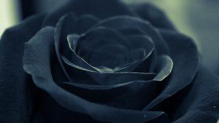 【馬ニアな話】薔薇の系譜