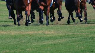 【中山記念2019予想】スワーヴリチャードやディアドラなど、出走予定馬を考察