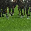 【朝日杯FS予想2018】雨予報あり、重馬場に強い血統は?