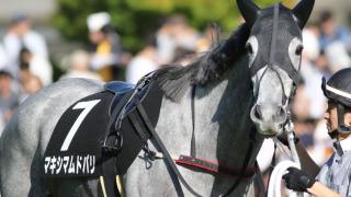 【愛知杯予想2018】昨年覇者のマキシマムドパリ、引退前にもうひと花咲かせるか?