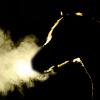 【ユニコーンS予想2019】実力伯仲の実績馬が激突する出世レース、穴馬の台頭はありうるか?