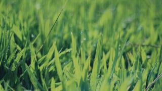 【キーンランドカップ予想2018】週中の雨でパワー型にシフトか?4頭の重馬場巧者に注目