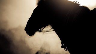 【北九州記念2019予想】不利が響いて連敗中のクインズサリナ、西村騎手とのコンビで巻き返しへ