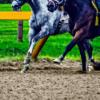 【天皇賞春2019予想】調教・最終追い切りが高評価の馬トップ3