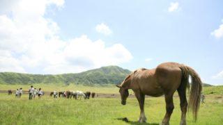 宿泊も可能なうらかわ優駿ビレッジAERU、今年からダートの名馬も仲間入り