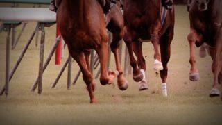 【福島記念2019予想】波乱のハンデG3?!ミッキースワローやステイフーリッシュなど出走予定馬を考察