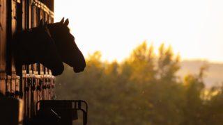 トラストが引退、乗馬へ