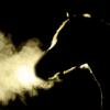 JRAプロキオンS(2020)で本命にしたい絶対軸馬は?