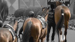 【プロキオンS予想2020】最終追い切り・調教内容が高評価の馬トップ3は?