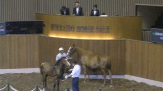 【北海道サマーセール2020】北海道の高校生らが育てた馬が2500万円で落札