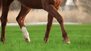 【函館スプリントS予想2020】差しを覚えた4歳牝馬エイティーンガール、成長力に期待