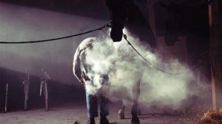 【アンドロメダS予想2020】高額馬アドマイヤビルゴ、改めてオープン挑戦へ