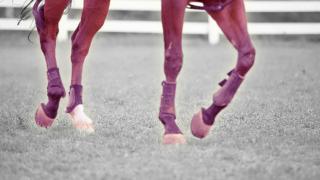 【AJCC予想2021】紅一点ウインマリリン、牡馬相手を克服出来るか