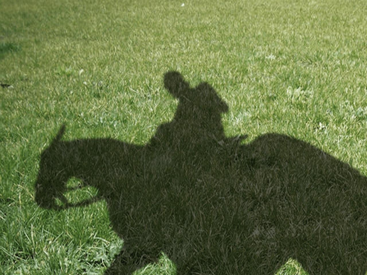 ハンデ 戦 競馬
