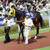 2冠馬ネオユニヴァース死す、種付中の事故
