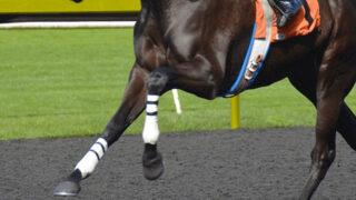 【JRANHKマイルC2021予想】最終追い切り・調教内容が高評価の馬トップ3は?