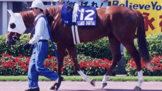 種牡馬引退したアグネスデジタル、十勝で功労馬へ